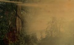 Dreamland (Rosenthal Photography) Tags: treu prisma agfavista200 familie ff135 35mm städte metasequoia c41 garten anderlingen 20170402 prakticabm analog asa200 dörfer siedlungen mirror misty dream land color tree nature prism praktica agfa vista epson v800