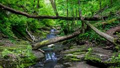 5555 (cleotalk) Tags: jessamine county ky kentucky gorge trail creek overstreet deer woods hiking