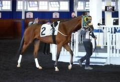 2017-04-23 (43) r10 #2 Hadeea (JLeeFleenor) Tags: photos photography md marylandracing maryland marylandhorseracing laurelpark horses thoroughbreds equine equestrian cheval cavalo cavallo cavall caballo pferd paard perd hevonen hest hestur cal kon konj beygir capall ceffyl cuddy yarraman faras alogo soos kuda uma pfeerd koin حصان кон 马 häst άλογο סוס घोड़ा 馬 koń лошадь paddock