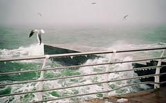 black sea (photoksenia) Tags: bird seagulls wind winter ice snow weather gale odesa waves sea storm seagull odessa ukraine water
