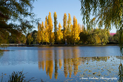 Autumn colours (Anna Calvert Photography) Tags: australia canberra lakeburleygriffin travelphotography autumn autumncolours landscape landscapephotography nature trees water reflections poplartrees