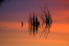 Colours, Water, Rushes (Nephentes Phinena ☮) Tags: himmelmoor sunset colours nature lake nikond500