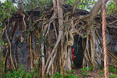 """SOME PICTURES LEAVE HAUNTING MEMORIES"" (GOPAN G. NAIR [ GOPS Photography ]) Tags: gopsorg gops gopsphotography gopangnair gopan photography haunted banyan tree abandoned house old lady ghost jungle"