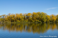 Autumn reflections (Anna Calvert Photography) Tags: annacalvertphotography landscapes nature outdoors plants molongloriver trees autumn water river canberra australia