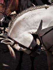 La trenza - The braid (ricardocarmonafdez) Tags: sevilla andalucia ciudad city urbano urban cityscape holidays fair aprilfair horses caballos color ricardocarmonafdez 60d ricardojcf ngc canon trenza braid luz light contrast contraste sunlight