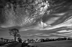 Altocumulus . (AlbOst) Tags: altocumulus clouds cloudformations skies sky trees countryside blackandwhite bw landscapesseascapescityscapes laquintaessenza