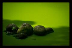 Verdure aquatique (yannickmeh) Tags: caillou campagne eau pierre vert