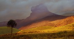 IMG_3940 The tree and the mountain (Rodolfo Frino) Tags: tree mountain hill clouds weather light shadow brown rural south patagonia landscape scenery paisaje paysage