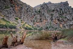 Torrent de Pareis (Foto-Unlimited) Tags: balearen baumstamm berge europa mallorca schlucht spanien sturzbach torrent de pareis wasser