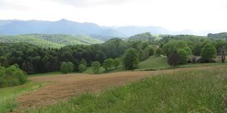 Forêts de Mourle et de Très Crouts, entre Saint Vincent et Montaud, Béarn, Pyrénées Atlantiques, Aquitaine.
