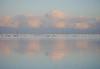 PORtret. (Warmoezenier) Tags: azul bas birds blanco blauw blue bridge brucke clouds gans ganso goose nationaal natuur nederland netherlands nube oosterschelde pajaro park pays puente white wit wolk zeeland zeelandbrug
