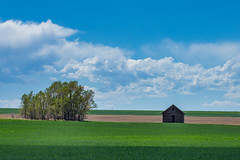 Green Grows the Green Grass (Bridget Calip - Alluring Images) Tags: 2017 alluringimagescolorado billowingclouds bridgetcalip colorado dustbowl easternplains greatdepression kiowacreek weldcounty woodenschoolhouse allrightsreserved blueskies copyrighted cumulsclouds dustyroads interior lifeontheplains oneroomschoolhouse prairie prairieschool schoolhouse trees wheatfields