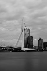 Rotterdam 20-05-2017-1 (Pure Natural Ingredients) Tags: rotterdam 010 rotjeknor nederland thenetherlands zwart wit black white monochrome schwarz weiss brug bridge water erasmus zwaan