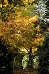 Mt Wilson 9 (trisharooni) Tags: australia autumn mtwilson breenhold