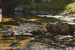 Nature #leaves #nature #rocks #streams #color #flow (jordansadowski) Tags: photopicpicturephotographerartbeautifulnikoncanongopropicofthedaycolorallshotsexposurecompositionfocuscapturemomentphotoshootphotodailyaperaturejsp leaves nature rocks streams color flow
