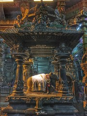 Meenakshi Temple (swapniljoshi2001) Tags: indiantemple templearchitecture travelphotography iphone iphone6s temples india tamilnadu madurai meenakshitemple