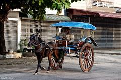 (isabelle.giral) Tags: mawlamyine burma birmanie horse street rue cheval pentax