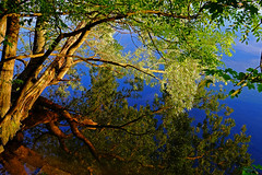 Reflections (ej - photography) Tags: baum tree sky himmel reflection spiegelung wasser water fujifilm xt1 fujinon schweiz suisse svizzera switzerland natur nature 2016 mai may leaves blätter green sunset sonnenuntergang see lake xf18135mmf3556r frühling spring