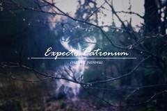 expecto patronum (Pantalymon) Tags: expecto patronum harry potter spell create patronus conceptual photography series