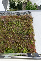 Green Roof (Heath & the B.L.T. boys) Tags: greenroof gogreen solar