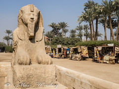SPHINX AT MEMPHIS, ANCIENT CAPITAL OF ANEB-HETCH P3260178.jpg (Marc Weinberg) Tags: egypt jordan cairo sphinx memphis ancient ancientcapital anebhetch travel travelagent middleeast historical history civilization statue tourism egypttourism photojournalist photojournalism freelance olympus getolympus