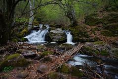 Deep in the forest (Goran Joka) Tags: forest wood trees river waterfall water cascades branches foliage bridge nature landscape outdoor staraplanina serbia srbija