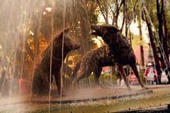 Fuente de Los Coyotes (Phylos_skp) Tags: coyoacán ciudaddeméxico méxico méxicodf mexicocity jardíndelcentenario cdmx fountain coyotes койот 喷泉 фонтан мексика 墨西哥 mexiko brunnen kašna น้ำพุ 噴水 メキシコ 狼 kojote water agua 멕시코 분수 조각 escultura sculpture skulptur نحت المكسيك القيوط 雕塑 彫刻 скулптура nikon nikond3400 nikkor