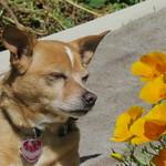 Perky & poppies 5 15 17 thumbnail