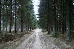 seul dans la forêt (8pl) Tags: chemin terre arbres couleurs beauté calme printemps slovaquie parcnational promenade solituderecherchée perdu gravats airfrais gravier