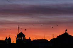 Las aves despiden al sol con sus mejores danzas (Ignacio M. Jiménez) Tags: aves birds atardecer sunset siluetas silhouettes torres towers cruz cross ubeda jaen andalucia andalusia españa spain ignaciomjiménez wow