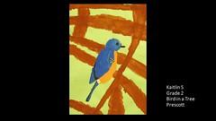 prescott-bird-in-a-tree-kaitlin
