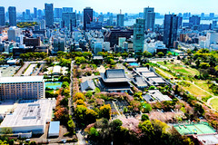 View Zojoji Temple from Tokyo Tower Observatory : 東京タワー大展望台より増上寺の展望 (Dakiny) Tags: 2017 spring april japan tokyo minato minatoward park garden shibapark city street outdoor landscape horizon skyline building blue sky nikon d7000 sigma 1770mm f284 dc os hsm sigma1770mmf284dcmacrooshsm nikonclubit