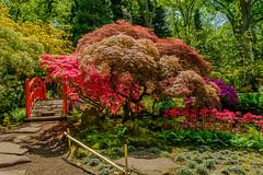 Colorful Clingendael (FotoCorn) Tags: clingendael denhaag japanesegarden japansetuin tuin garden colorful colors colourful colours natuur nature flora netherlands thehague 39colorful 52of2017