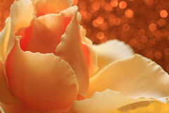 Show off (alideniese) Tags: macro closeup flower rose petals colour bokeh 7dwf hbw