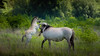 DSC_3347 (gitte123) Tags: horse flickr konikpaarden merrie veulen natuur