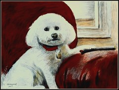 Colored Pencil Drawing Of Zoe - Drawn by STEVEN CHATEAUNEUF (2017) (snc145) Tags: art drawing coloredpencil dog pet animal bicheon zoe wall window couch leather remotecontrol drawings detail stevenchateauneuf 2017 flickrunitedaward worldofanimals dogportrait