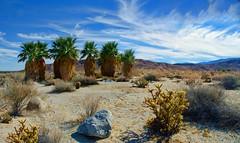 Anza-Borrego Desert State Park, San Diego County California (Gail K E) Tags: anzaborrego california desert usa fanpalmtrees socal sandiego landscape cactus barren scenic oasis