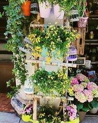 Verona (odalbabm) Tags: verona summer flower flor flores flowers italia italy beautiful