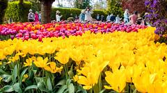 People Everywhere (donswingley) Tags: washington skagitvalley farms tulipfields