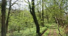 IMG_4340_4341 (Bike and hiker) Tags: ourthe aisne printemps lente