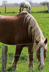 Breakfast Time (Poocher7) Tags: animal horses feeding breakfast morning fence pasture rural country threebridgeson ontario canada countryscene