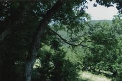 TARAMA353
