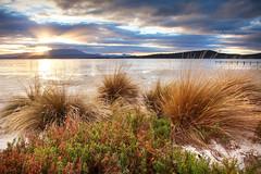Grassy Shores || SOUTH ARM || TASMANIA (rhyspope) Tags: australia aussie tas tasmania hobart south arm sunrise sunset nature rhys pope rhyspope canon 5d mkii shore beach grass sea ocean water sun ray sky cloud sand mount wellington reflection rays