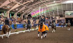 17429_Sydney_CDI_GPFS_Pres_7041.jpg (FranzVenhaus) Tags: athletes dressage australia equestrian riders horses ponies rug siec nsw sydney newsouthwales aus