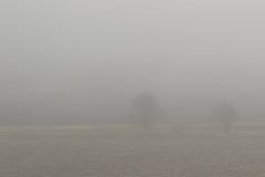8X8A9408 (tatianahelin) Tags: spring fog countryside