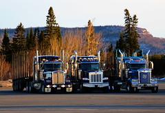 Three Amigos (jr-transport) Tags: kenworth heavyhaul custom w900 w900l tralex trailer peterbilt ontario hwy11 367 sfa