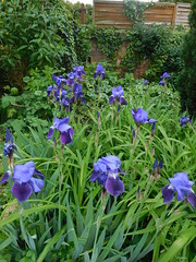 Garden in Gloucestershire ... Thurs 27th April 2017 (ecology_garden) Tags:
