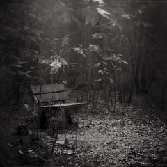 Breathe in breathe out (soleá) Tags: ethereal dreamy carmengonzález soleá benchintheforest blackandwhite vintagefeel bench light