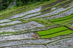 Bali_0031