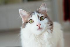 140/365 (Garen M.) Tags: 365project buttercup testshots dog lensbabyvelvet cats susanhome nikond800 jerry jojo